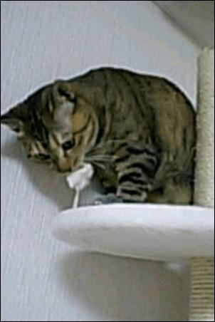 佐藤健の実家の猫